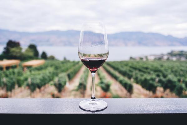 Wina ekologiczne vs biodynamiczne